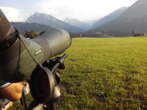 Observación Pico Habitch